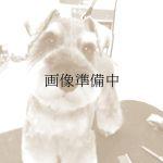 犬のトリミングサロン ドッグスルーム