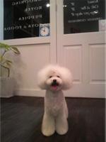 目黒 トリミング美容室 Dog's Room